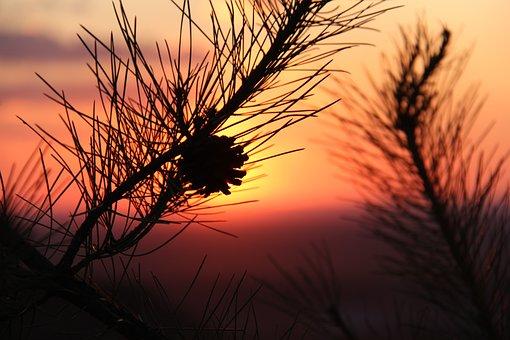 Alxa, Sunset, Echinacea, Inner Mongolia, The Scenery