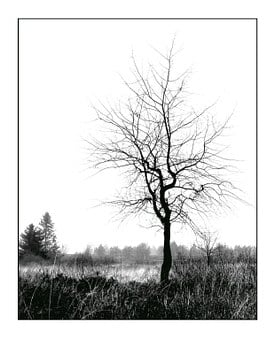 Winter, White, Sky, Tree, Individually, Nature