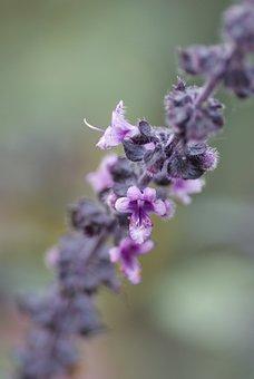 Nature, Shrub, Blossom, Bloom, Close, Macro, Purple