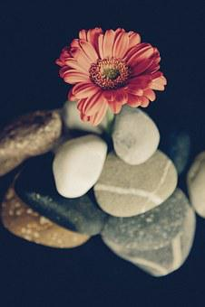 Flower, Blossom, Bloom, Gerbera, Wild Flower, Plant