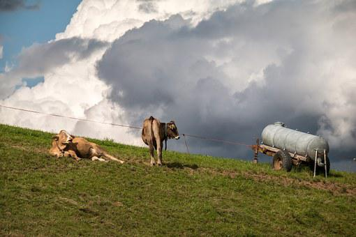Cows, Clouds, Pasture, Sky, Cumulus Clouds, Cumulus
