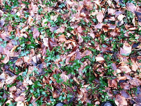 Forest, Forest Floor, February, Leaves, Disputed Ground