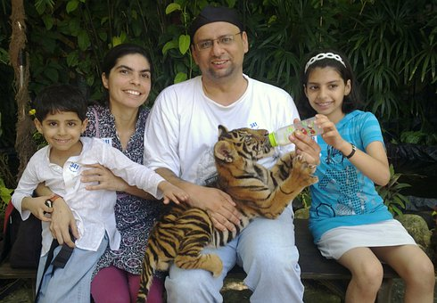 Tiger, Cub, Bangkok, Family, Feline, Feeding, Milk