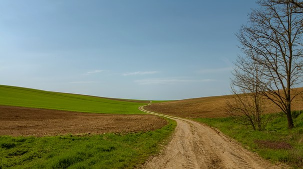 Path, Field, Fields, Lane, Nature, Tree, Grass