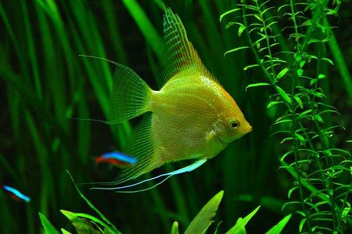 Fish, Aquarium, Tank, Tropical Fish, Underwater, Water