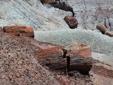 Petrified, Forest, National, Park, Petrified Wood