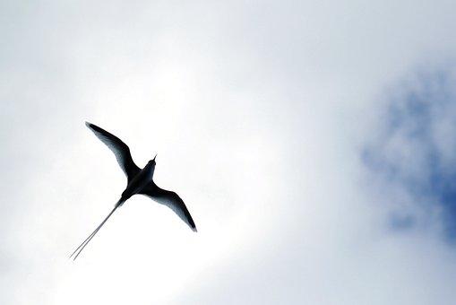 Stern, Freebird, Span, Seagull, Backlit, Silhouette