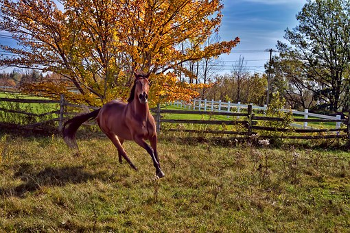 Horse, Animal, Horses, Horseback Riding, Gallop