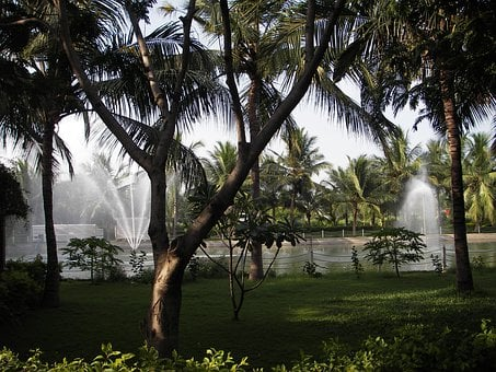 Palm Trees, Fountain, Fountains, Resort, Hotel