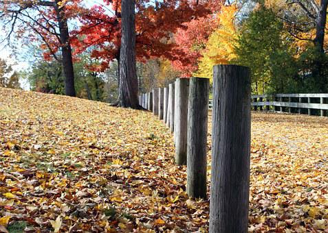 Autumn, Leaves, Color, Fall, Fence, Park, Hike