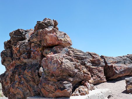 Petrified Wood, Petrified Forest National Park, Arizona