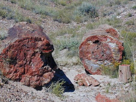 Petrified Forest, National Park, Usa, Fossils