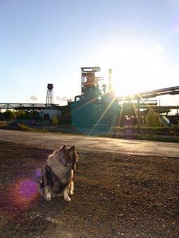 Dog, Phönix West, Steel Mill, Keeshond, Dog Breed, Race