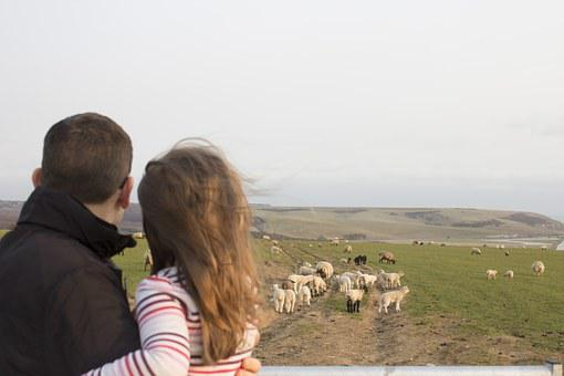 Family, Father And Daughter, Sheep, Sussex, Lambs