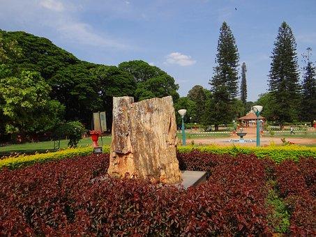 Fossil, Tree-trunk, Petrified, Tree, Geology, Rock