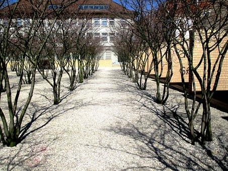 Trees, Avenue, Park, Plant, Gravel Paths