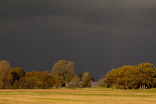 Biesbosch, Nature, Trees, For Rain, Landscape, Clouds