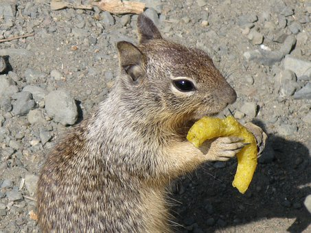 Gophers, Fast Food Junky, Chips