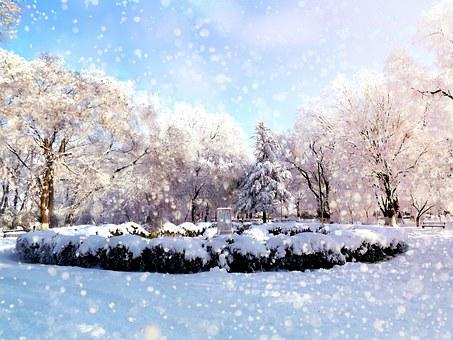 Park, Winter, Snow, Rime, Trees, Landscape, Feerie