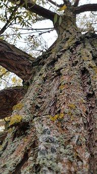 Tree, Moss, Mushroom, Nature, Log, Bark, Fouling, Green