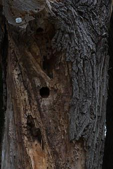 Log, Dead Plant, Nature, Wood, Tree, Old, Gnarled