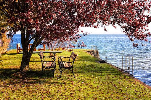 Autumn, Tree, Bench, Bank, Out, Nature, Rest, Seat