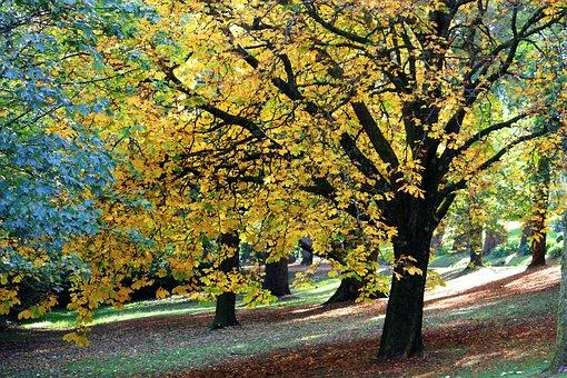 Autumn, Fall, Nature, Leaf, Season, Yellow, Tree, Park