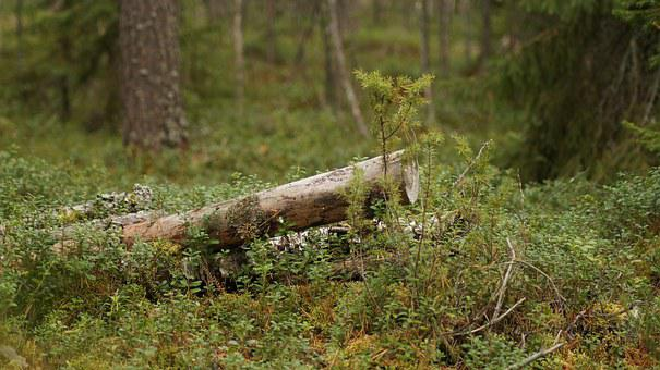Oulu Finland, M K, Finland, Finnish, Forest, Nature