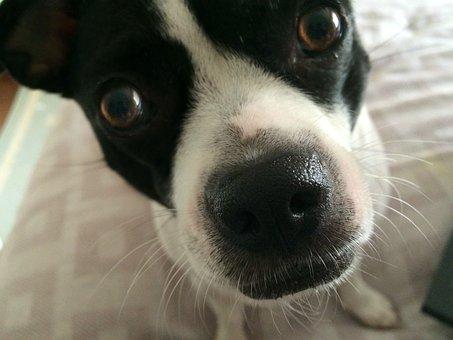 Dog, Rescue, Pet, Domestic Cute, Big Nose, Funny Look