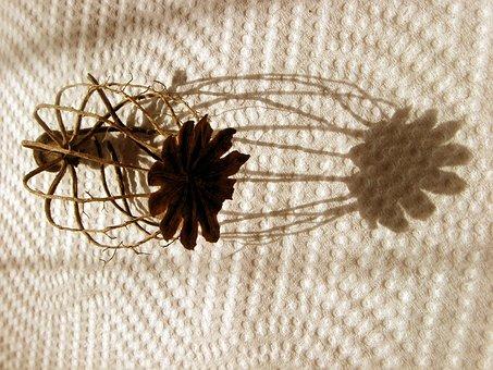 Poppyhead, Empty, Shadow, Light, Decoration, Simplicity