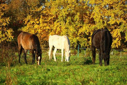 Autumn, Horse, Thoroughbred Arabian, Pasture, Mold