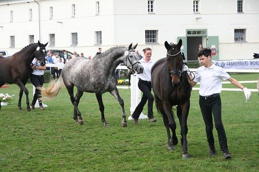 Trakehner, Horse, Federal Mares Show, Breeding Show