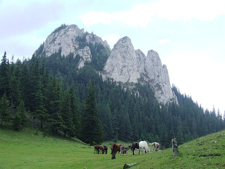 Cliff, Pine, Forest, Nature, Mountains, Horse, Stud