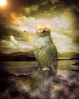 Owl, Mystical, Sky, Clouds, Birds, Sun, Weather