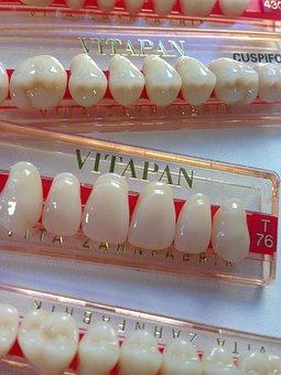 Tooth, Dental Prosthesis, Dental