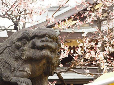 Guardian Dogs, Shrine, Plum, Stone Statues