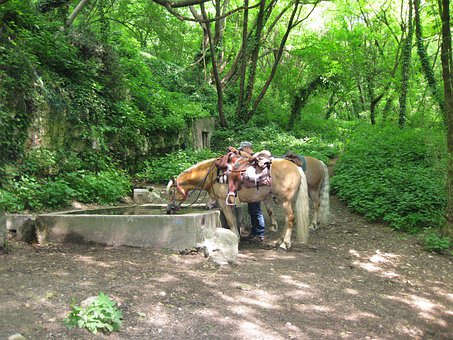 Horse Trough, Horses, Haflinger, Ride, Forest, Green