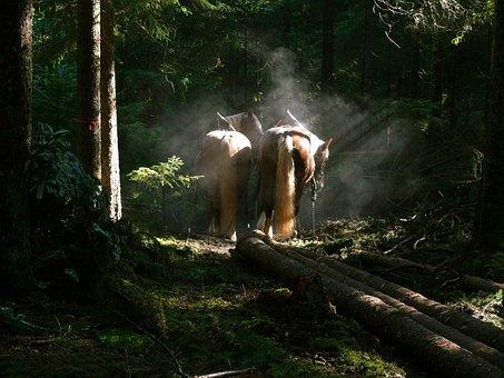 Haflinger, Horses, Wood Work, Forest, Wood Back