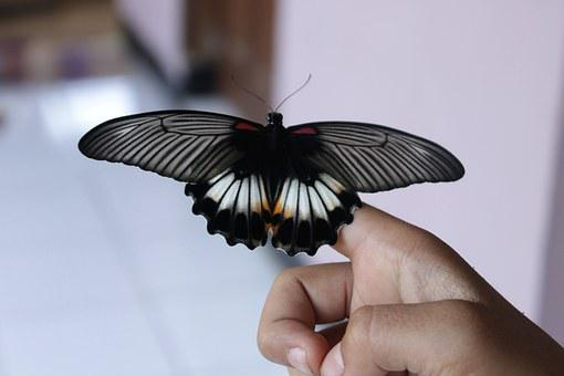 Butterfly Born, Black And White, Insect