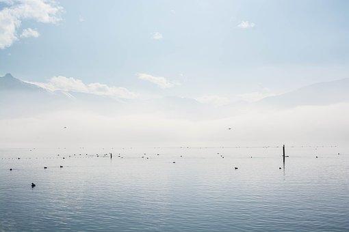 Lake, Clouds, Fog, Water, Wave, Rest, Ducks, Animals