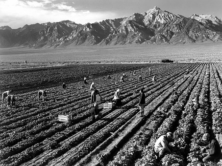 Fieldwork, Harvest, Mount Williamson, Ansel Adams