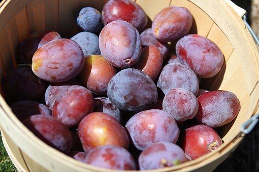 Plums, Fruit, Harvest, Organic, Healthy, Fresh