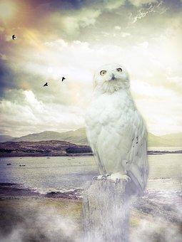 Owl, Barn Owl, Enchanted, Sky, Clouds, Birds, Sun