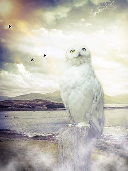 Owl, Barn Owl, Enchanted, Sky, Clouds, Birds, Sun
