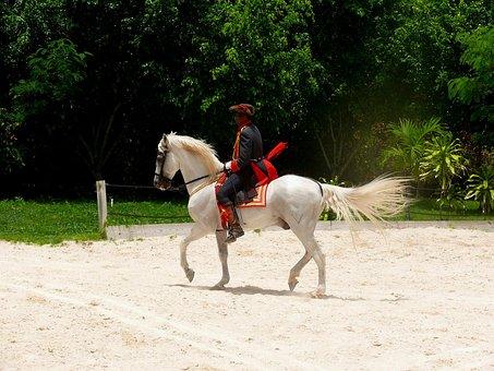 Horse, Show, Riding, Man, Dominican, Republic, Exotic
