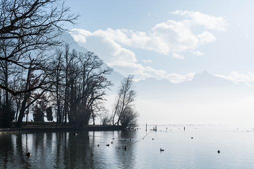 Lake, Clouds, Fog, Water, Rest, Ducks, Animals, Birds