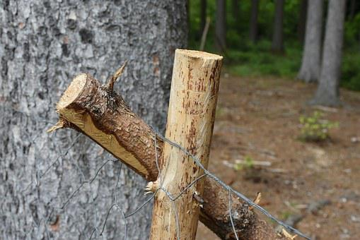 Wood, Tree, Stempen, Fence, Wire Mesh, Fixing