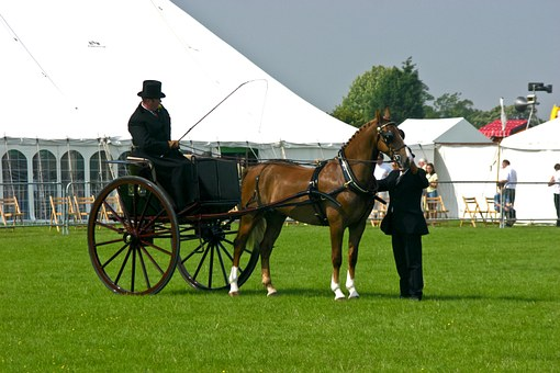 Horse, Driver, Top Hat, Whip, Harness, Mare, Marquees
