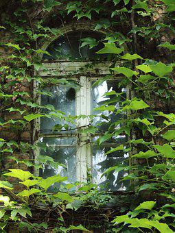 Window, Margaret Island, Amber, Abandoned, House