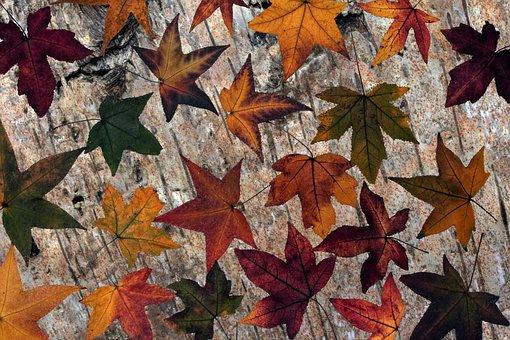 Leaves, Dry Leaves, Amber Tree Leaf, Wood Background